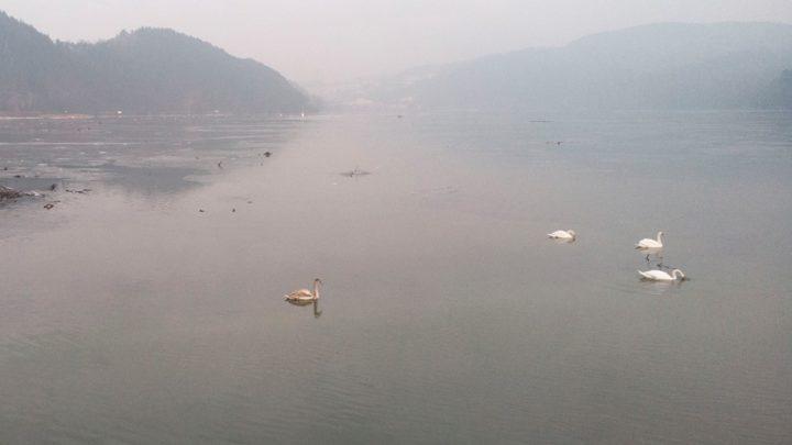 Strażacy ratowali łabędzia na Jeziorze Czchowskim [ZDJĘCIA]