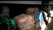 Brzesko. Policjanci zabezpieczyli blisko 700 kilogramów krajanki i liści tytoniowych bez oznaczeń polskich znaków akcyzowych